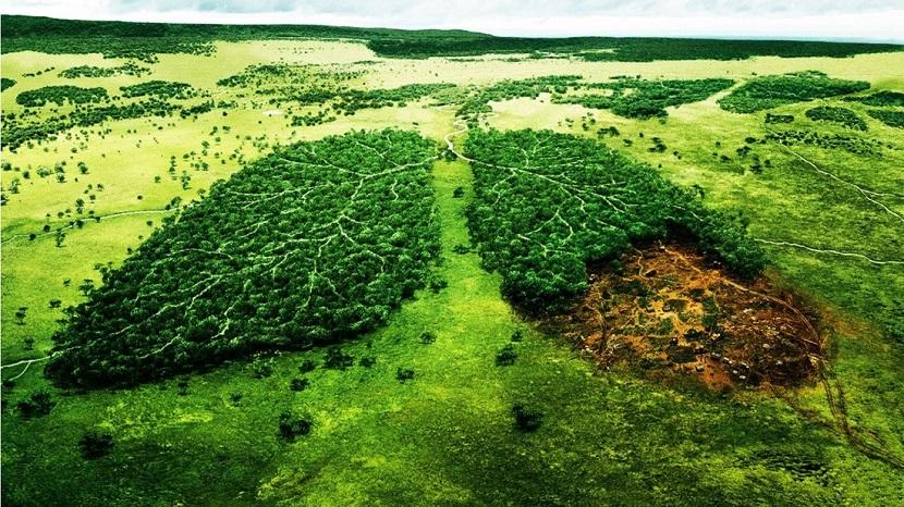 Impacto ambiental de la tecnología digital: Efectos del crecimiento humano